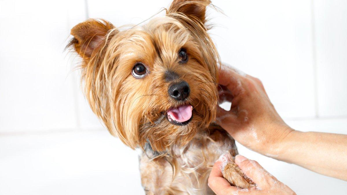 Купание щенка