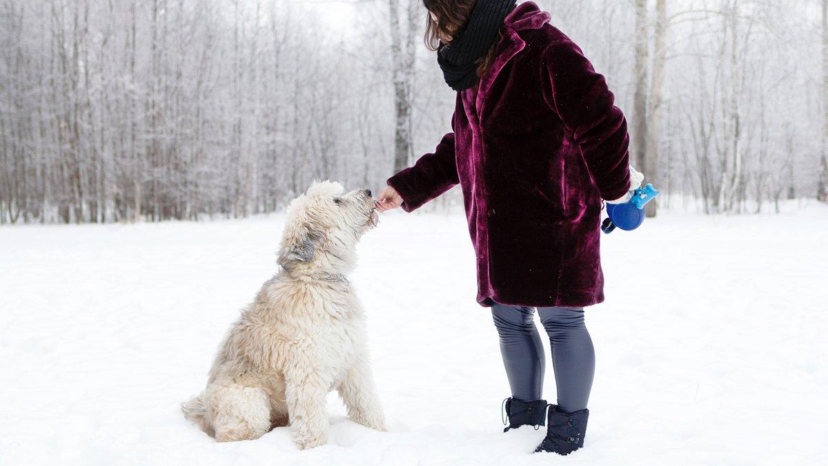 Собака и зима