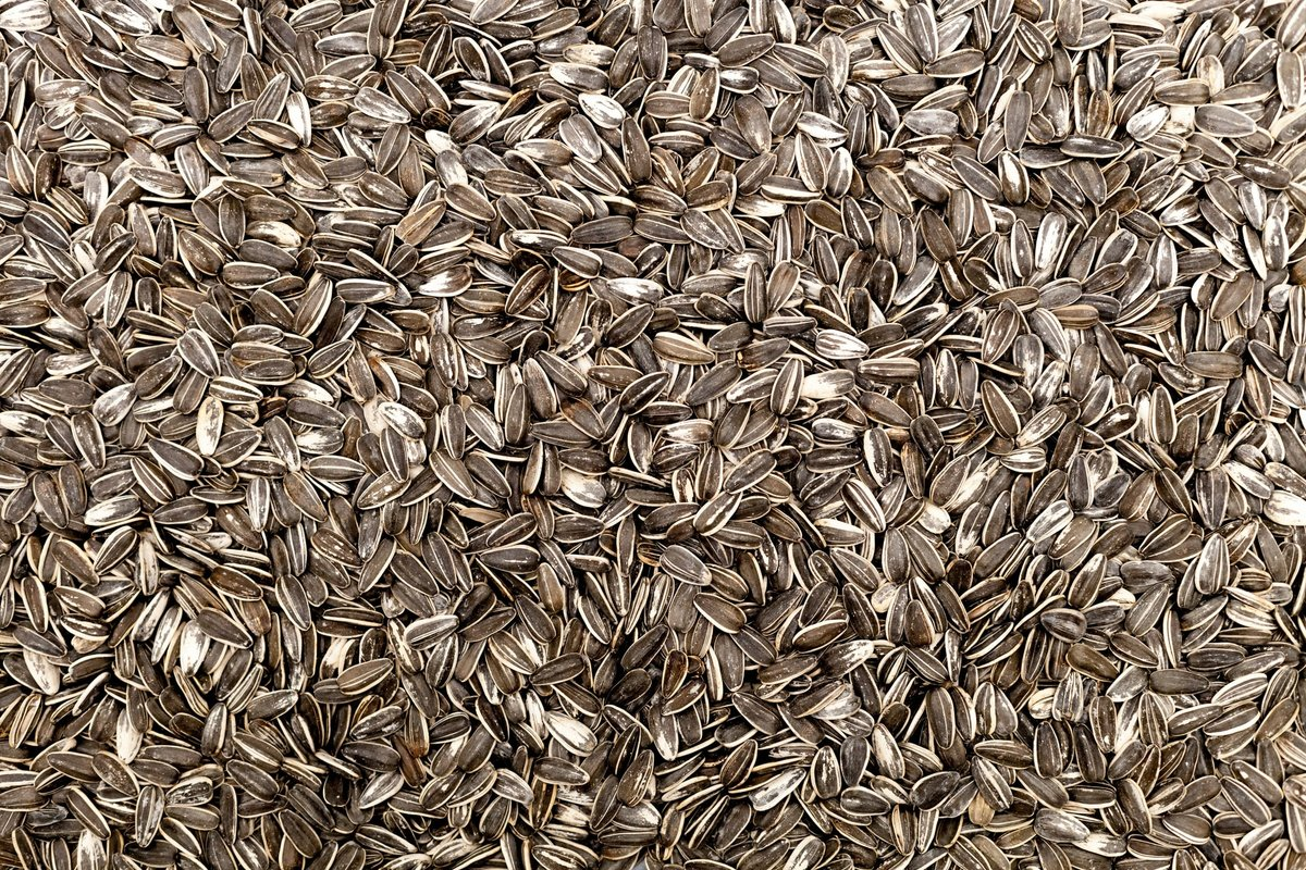 семена подсолнечника полезные свойства