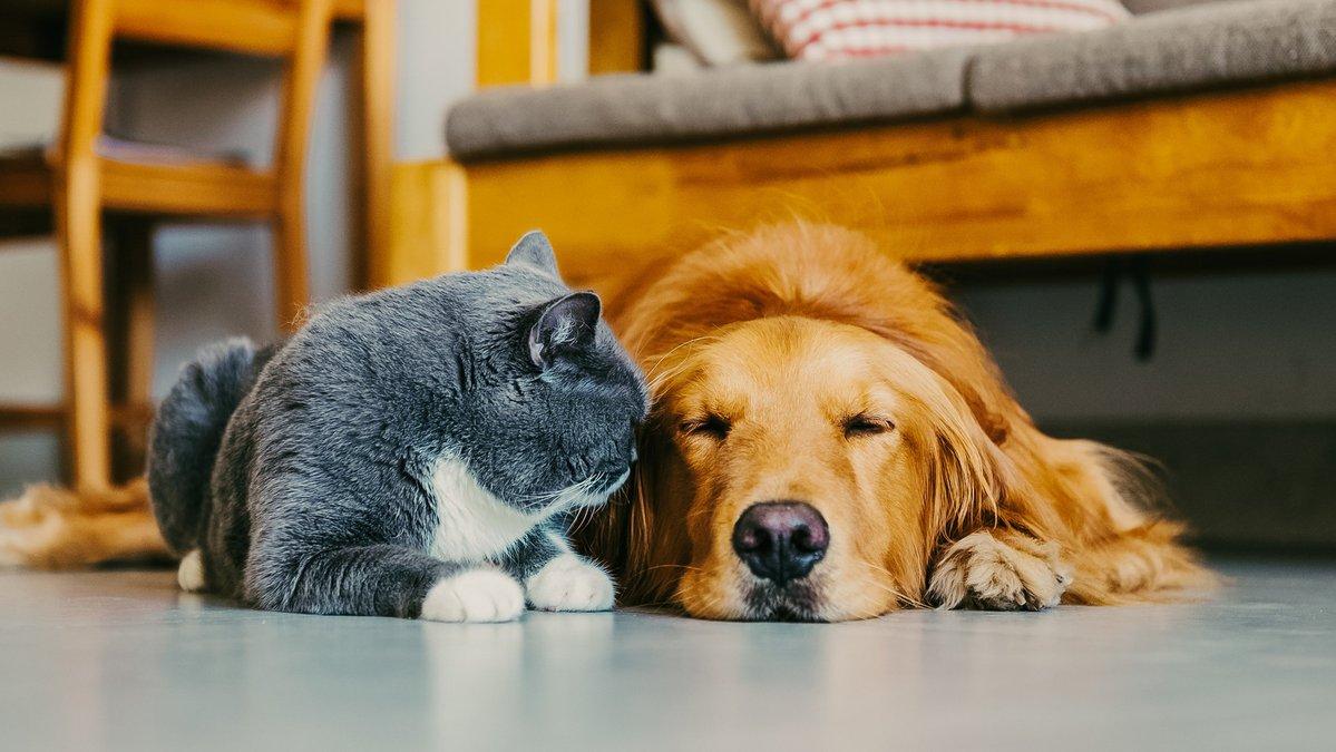 Собака и кошка