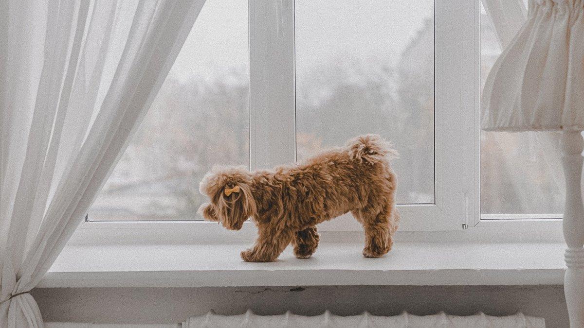 Собака питомцы