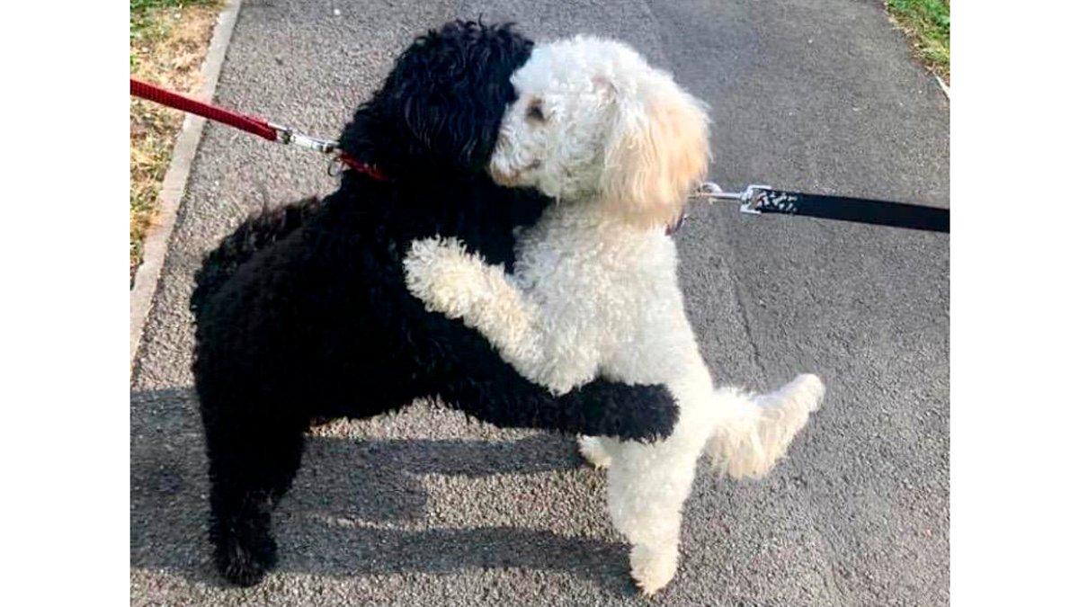 Собаки-обнимашки