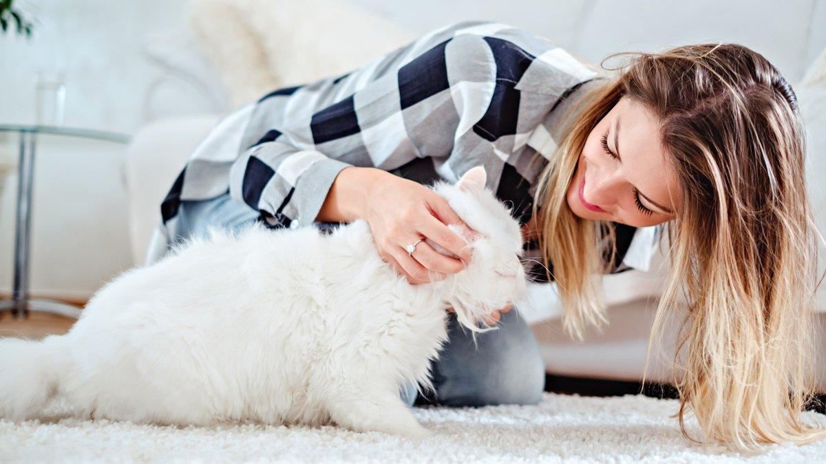 Границы кошки