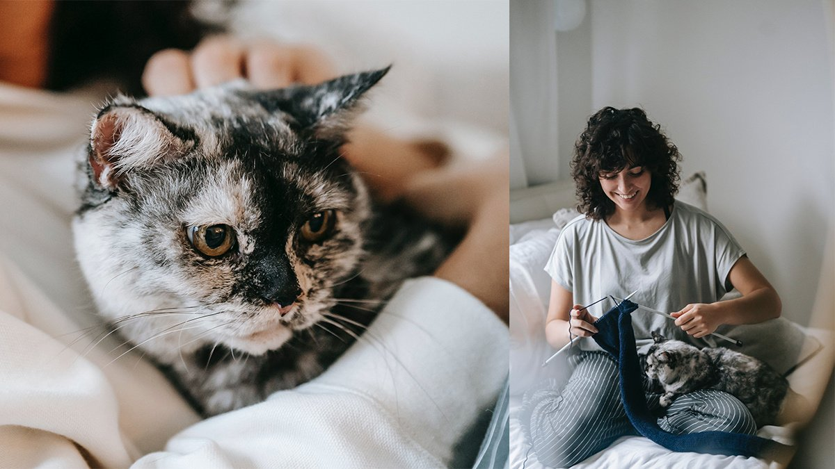 Кошки выбирают