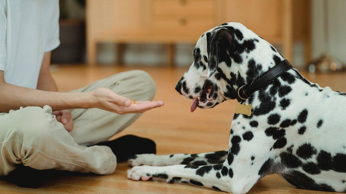 Как угодить привередливой собаке