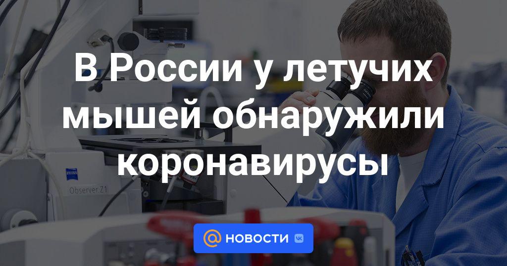 В России у летучих мышей обнаружили коронавирусы