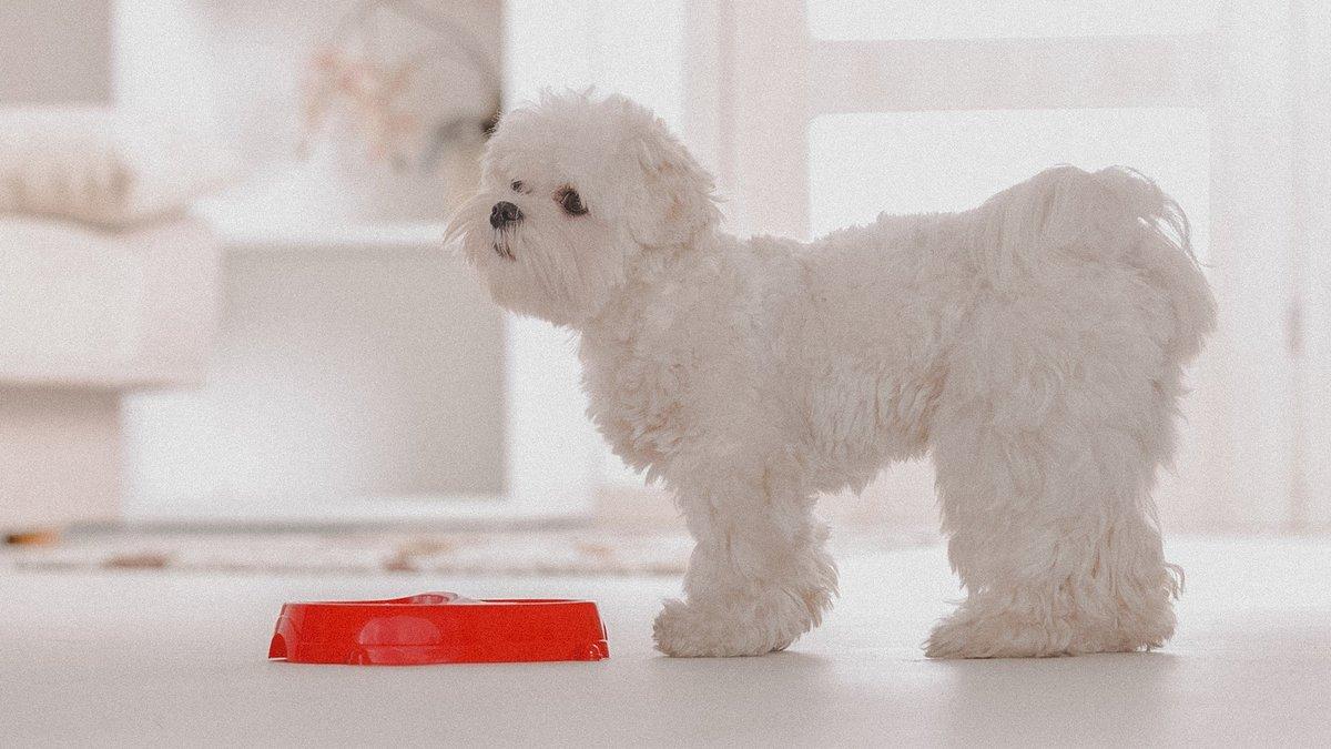 Собака с миской