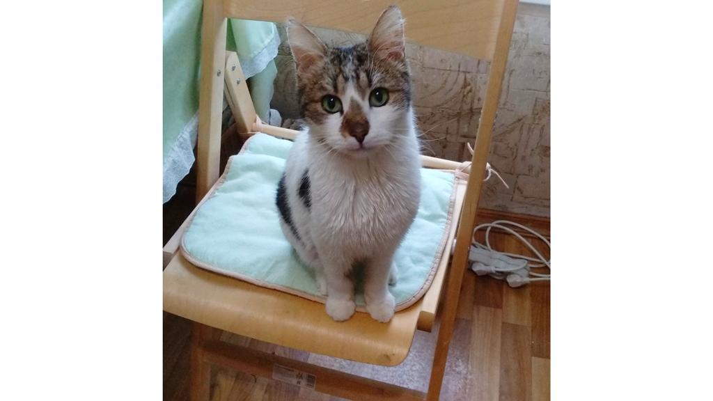 Кот Иржик, донор