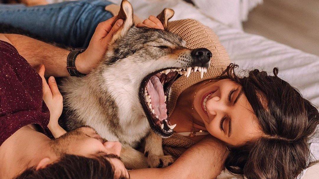 Блог «Волк в большом городе»