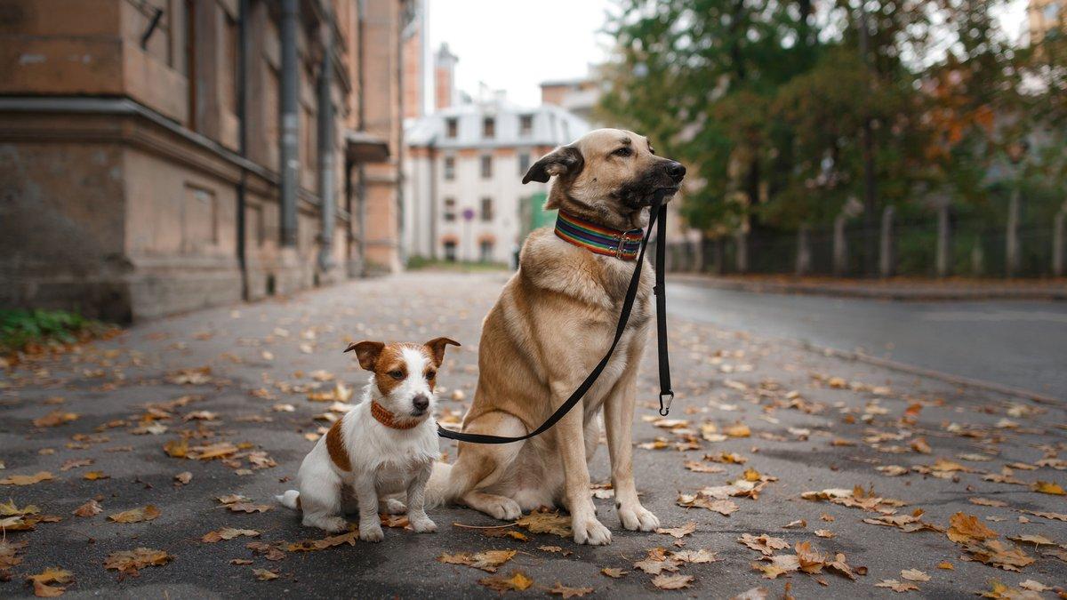 Маленькая и большая собака