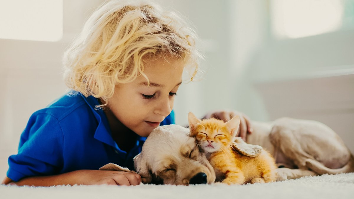 Котенок, собака, ребенок