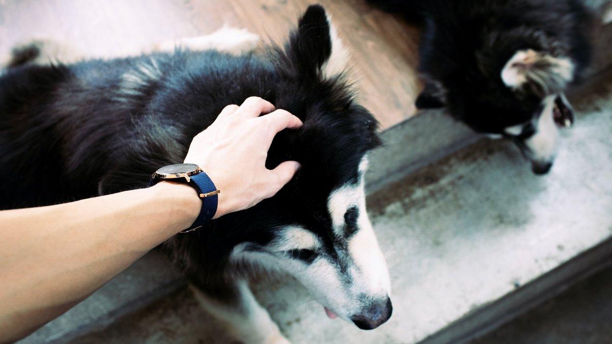 Собака и человеческая рука